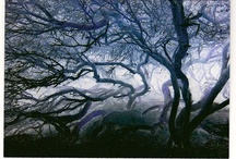 Mysterious, Spooky Trees & Paths / by Jenn Busch