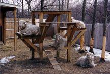 Goats  / by Shelby Jones
