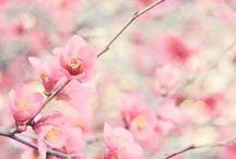 Colors - Precious Pinks / by Angel