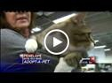 Adopt-a-Pets / by WZZM 13