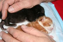 Kittens & Cats / by Erin Klaene-Hobson