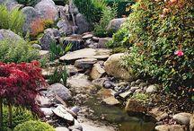 Garden & Yard / by Brandi Tucker