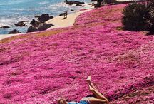 travel love / by Pamela Carrasco