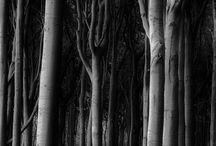 Landscape / by illya