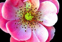 flora / flowers, plants and vegetation / by Linda Hansen