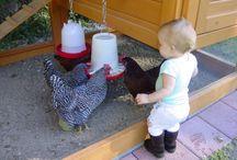 My Future Farm Ideas / by Alisia Cardenas