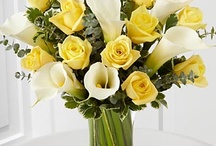 Clare / by Philosophy Flowers Official