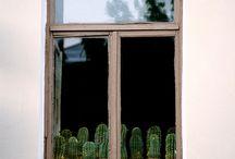 planterest. / by Marla R
