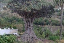 Tenerife, Canary Islands (My Heritage)  / by Jackie Pena