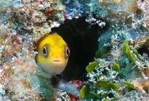 BLENNY.  / by Heal the Bay