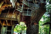 Treehouse / by Lynn Petti