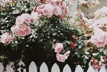 Pink garden / by Marion Albertyn