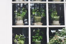 Window / by AJM