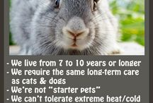 rabbits / by Kelly Hersman