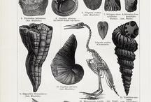 Scientific Prints / by Sarah J. Higgs