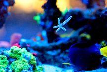 Aquarium  / by Martin Crête