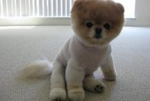 Puppy! / by Caitlin Dunn
