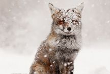 winter / by anabela / fieldguided