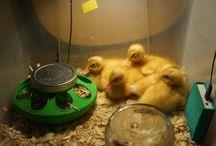 Ducks / by Maggie Wyche
