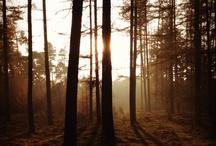 woods / by Sammie Clark