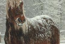 Horses (beautiful) / by Kathleen Waheed