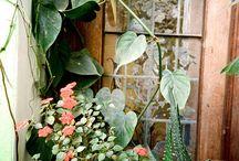 Plants / by Chau Nguyen