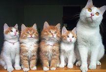 Kittens / Kittens / by Shawn Malek-zadegan