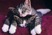 Cute Animals :)) / by Dallas Butterfield