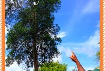 Ti Kaye Gardens / We offer garden tour of the property once a week with our very knowledgeable Grounds Manager Michele. Come see our herb garden, sample our fruit trees and more. / by Ti Kaye Resort & Spa