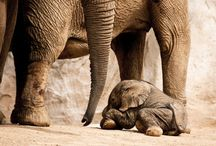 Elephants are Majestic / by Raenette Palmer
