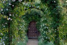 Our garden / by Anita Crockett