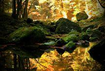Nature / by Linda Minor