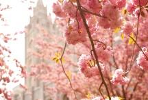 Church  / by Lindsay Call