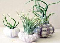 Plants, Fairy Gardens  & Terrariums / by Cindy Wright Craciunoiu