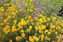 exterior possibilities / ideas for beautiful outdoor spaces, gardening, and planting ideas and information / by k kennedy