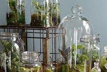 Mini-Biospheres / by Lee Woodruff