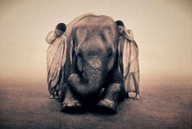 striking images / by Katie Thornton