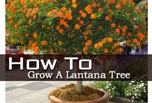 gardening and landscapes / gardening and landscapes, bonsai and flowers,  / by inzaratha c