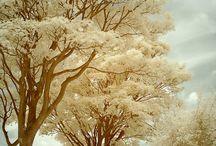 Flores, Árboles, Naturaleza - Flowers, Trees, Nature. / by Yemi Duper