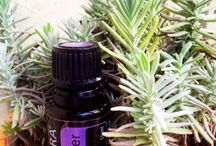 Health & Wellness / Young living independent distributor #1528181 / by Rachael Shanks