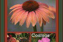 garden\flowers / by Sandi Hostetler Foust