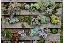 Backyard plans / by Fiona Grosser