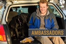 Dublin Ambassadors / Look into the lives of some of our proud Ambassadors for Dublin Dogs.  Hear about their lives with their wonderful pooches and their everyday life! / by Dublin Dog Co.