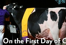 Expo's 12 Days of Christmas / by World Dairy Expo