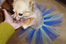 Pet Love / by Angie Briggs @ DesperateHouselife.com