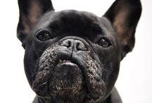 .Kawaii / #dogs #puppies #puppy #cutenessoverload #awww #mansbestfriend #dogmeetup #dogclub #nocatsallowed / by CO DE + / F_ORM