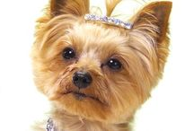 Yorkie / by Holly Means Hoppe