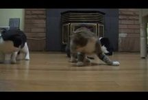 Cat Videos / If you're a cat lover then you should love these cat videos... / by Very Funny Videos