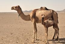 In the Desert / by Brimstone Dreams