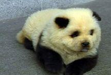 panda<3 / by RUBY DW